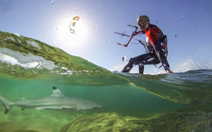 Locker Baumeln Requin kitesurf