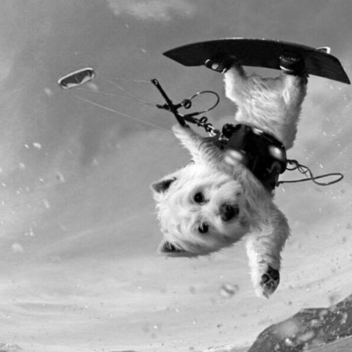 kite dog chien fun marrante extreme Univers Kite kitesurf Photos 2016 Photo universkite.fr kitesurfeurs Kitesurfeuses Femme Universkite